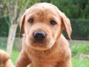 M laga con la adopci n de animales qu es for Protectora de animales malaga ciudad jardin